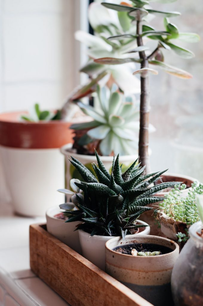 Collection of small potted indoor plants in a wooden tray on a window sill