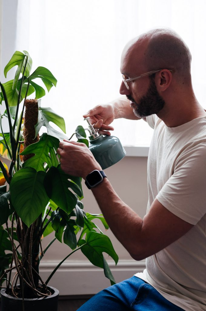 Juan Sandiego spraying a potted monstera indoor plant to raise the humidity